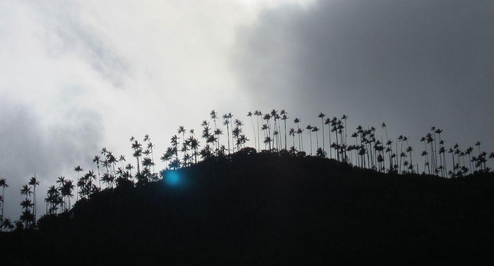 Este valle colombiano tiene las palmeras más altas del planeta - 3