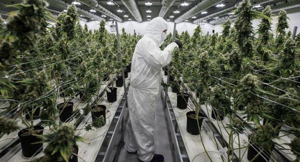 Canopy Growth cultiva plantas en invernaderos y en instalaciones cerradas. (Foto: Getty Images)