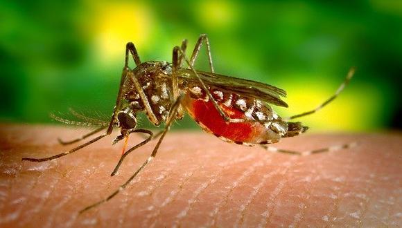 En dengue es transmitido por un vector, en este caso, el mosquito Aedes Aegypti. (Foto: Pixabay)