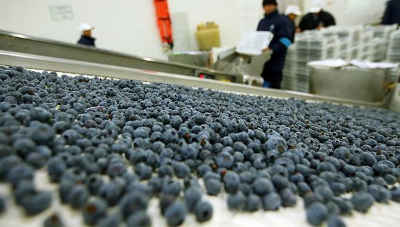Perú es considerado el principal exportador mundial de arándano, según Mincetur. (Foto: Rolly Reyna / GEC)