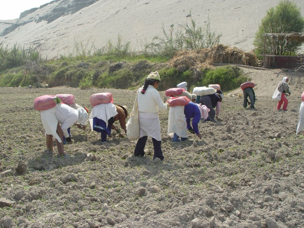 Agricultores de zonas de extrema pobreza. (Foto: GEC)