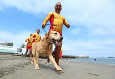 La historia de Gringo: un cachorro perdido que se convirtió en agente de PNP | FOTOS