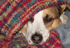 Cómo ayudar a tu mascota a superar este inusual invierno