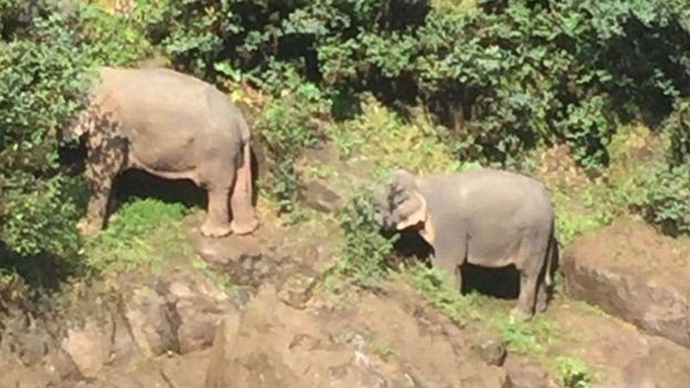 Con ayuda de cuerdas, el equipo de rescate trasladó a los dos elefantes sobrevivientes del rebaño. (THAILAND DNP).