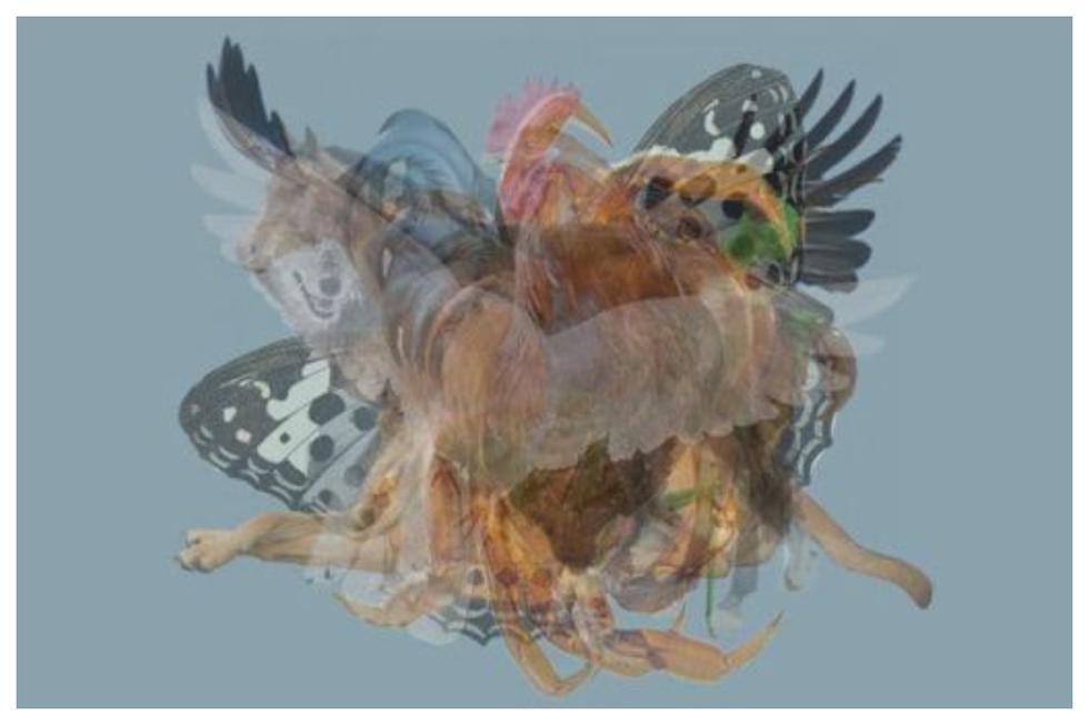 El primer animal que identifiques en la presente imagen podría revelar algo oculto de tu personalidad. (Foto: Lessons Learned in Life)