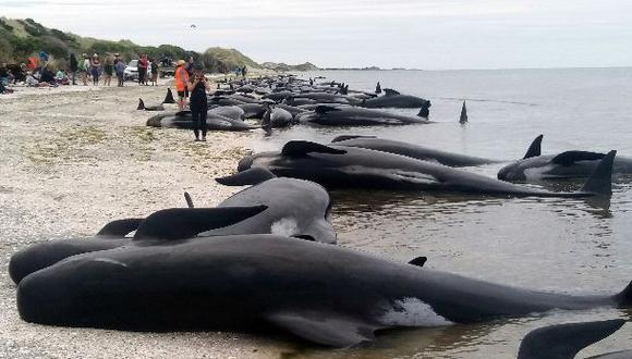 Nueva Zelanda teme que cadáveres de ballenas varadas exploten