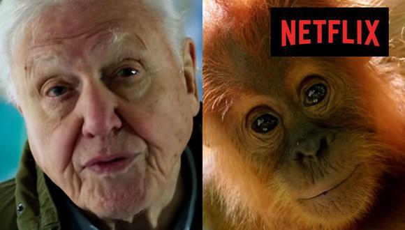 Qué Ver En Netflix Estos Fueron Los Estrenos Del Domingo 4 De Octubre David Attenborough Películas Y Series Nnda Nnlt Respuestas El Comercio Perú