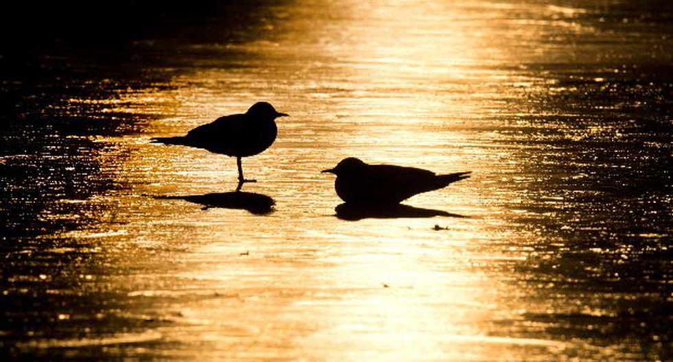 Temor por gripe aviar: zoológico ruso abatió a todas sus aves