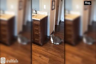 Viral: robusto gatito intenta saltar a lavadero