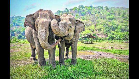 Sin elefantes se incrementarán las emisiones de CO2 en el planeta.