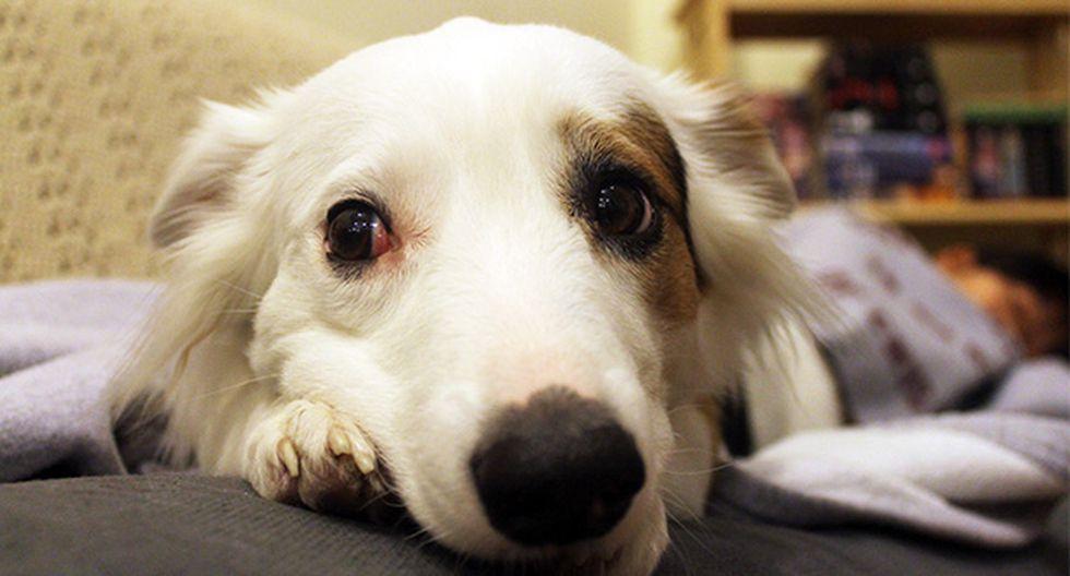 ¿Cómo calmar a un perro asustado por los fuegos artificiales? - 1