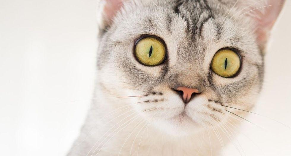 Foto 1 de 5: ¡El gato se volvió loco al ver a la ardilla! Desliza para continuar. (Foto referencial: Pexels)