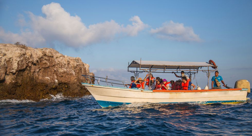 De marzo a diciembre podrás avistar a las ballenas jorobadas.(Foto: Shutterstock)