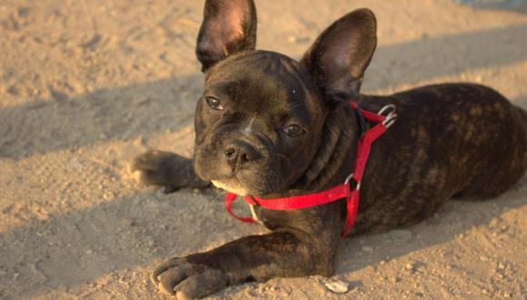 El golpe de calor se produce cuando sobre exigimos a nuestras mascotas a actividades que generan calor corporal. (Foto: Pixabay)