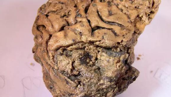 El cerebro se ha preservado en lodo 2.600 años. (JOURNAL OF THE ROYAL SOCIETY INTERFACE)