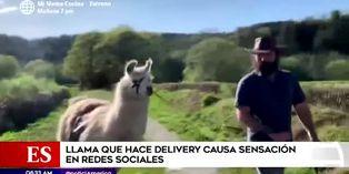Coronavirus: llama que hace delivery causa furor en redes sociales