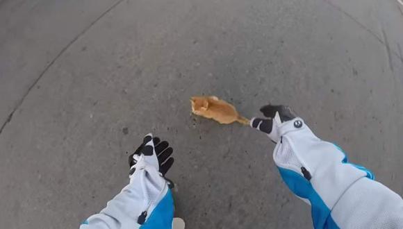 Youtube: Motociclista salvó a gato en medio de la pista