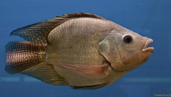La primera vez que notaron caracterísitcas femeninas en los peces macho fue en la década de los 90.