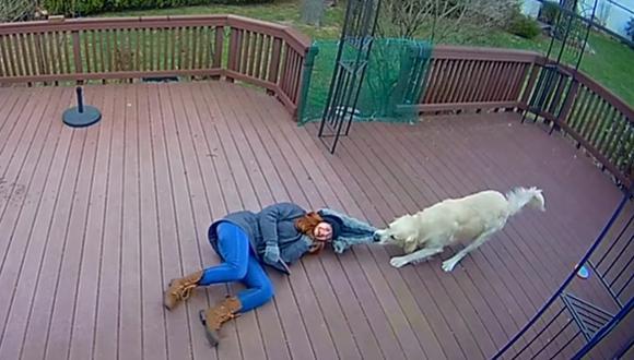 La mujer consideró muy gracioso que su perro confundiera su capucha con un juguete. (Foto: Ring / YouTube)