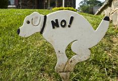 ¿Qué pasa cuando no recoges lo que deja tu perro?