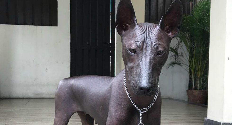 Foto publicada en Twitter que muestra a un can de piel oscura, sin pelo y con la mirada fija dejó bastantes dudas. ¿Es un perro real o una estatua? (Foto: pipernriley)