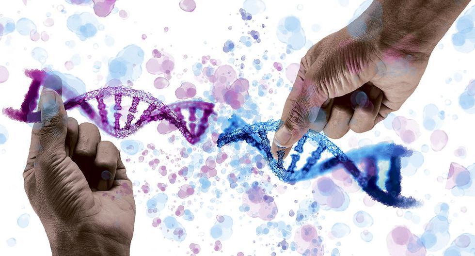 La técnica CRISPR fue aplicada por primera vez en un ser humano por un médico chino, sin conocimiento ni autorización de sus superiores. Su objetivo era alterar los genes de una persona para lograr la inmunidad al sida. (Ilustración: Víctor Aguilar)