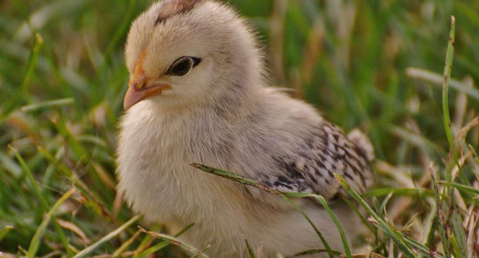 La pequeña ave habría sido asesinada de una forma atroz. (Foto: Referencial - Pixabay)