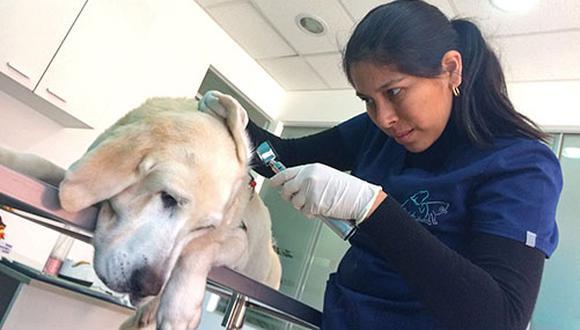 Vanessa Llerena (en la foto) dice que cuando el perro empieza a tener problemas de piel, da signos muy ligeros y si se ignora, se va agravando. La piel se inflama cada vez más y la afección puede llegar a ser irreversible, particularmente cuando involucra el oído.