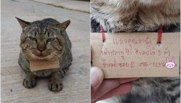 La historia y fotografías se hicieron virales en redes sociales por la cara de satisfacción del felino. (Foto: ช้างเผือก / Facebook)