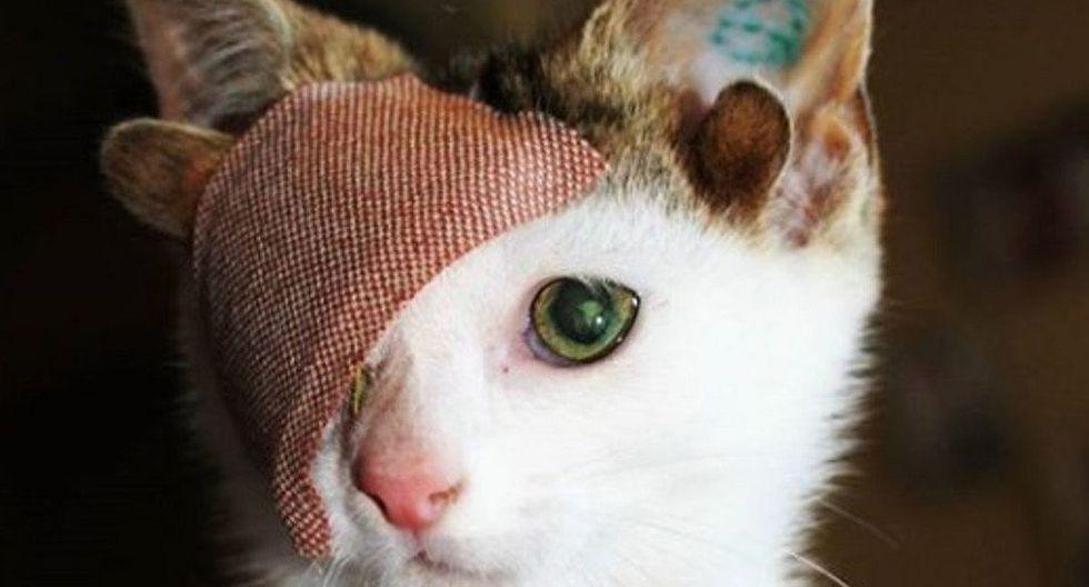Frankie nació en la calle y cuando fue encontrado estaba en pésimo estado. Hoy tiene una nueva oportunidad de vida. (Foto: Instagram @frank_n_kitten)