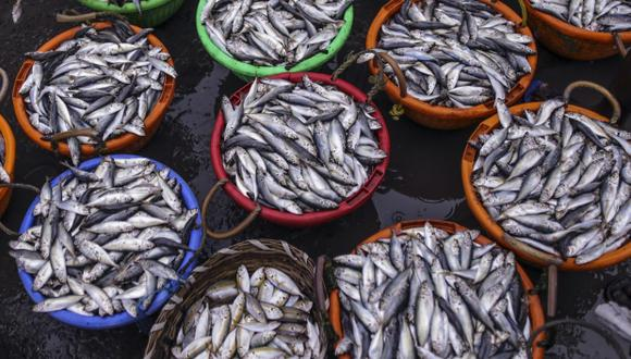 La FDA recomienda que las mujeres en edad fértil y los niños coman de dos a tres veces por semana pescados como el salmón o las sardinas. (Foto: Bloomberg)