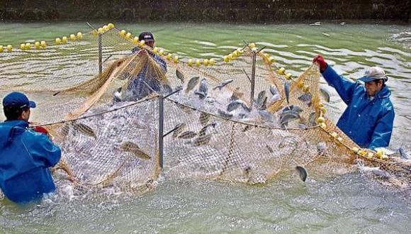 También, se espera reglamentar la exportación de semillas y reproductores con fines de acuicultura y de especies Cites. (Foto: USI)