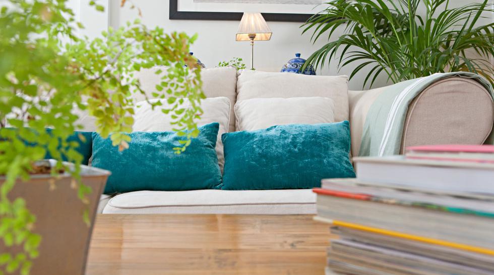 Conoce los beneficios de tener plantas en el hogar - 1