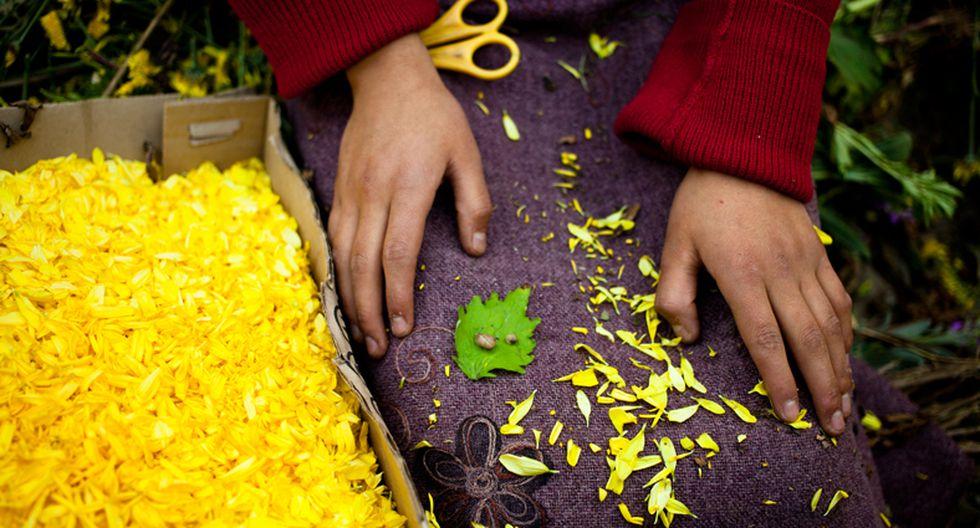 Deslúmbrate con la ruta de las flores y Semana Santa de Tarma  - 3