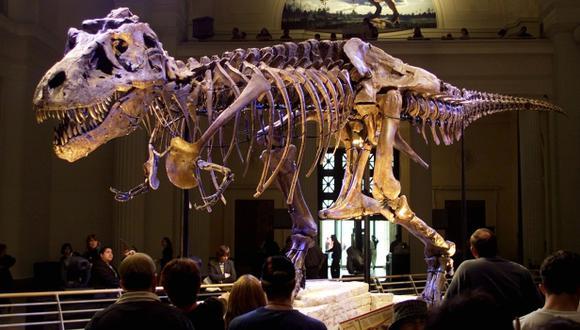 """La extinción de los dinosaurios fue un """"golpe de mala suerte"""""""