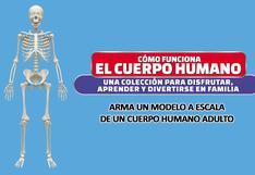 Estudia el Cuerpo Humano al detalle