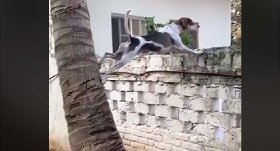 Este perro ha sorprendido a millones de internautas al trepar esta palmera. | Foto: Facebook/Conexión Informativa