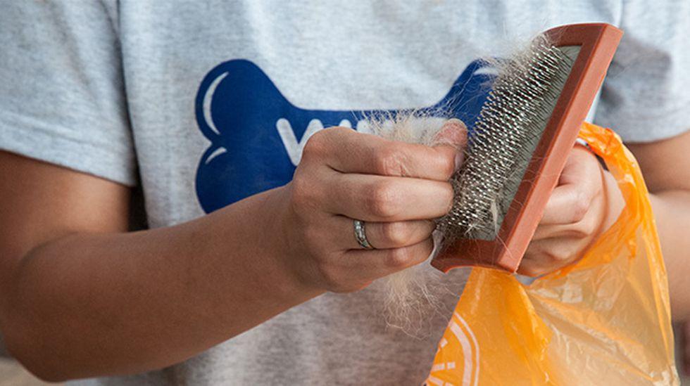 Peinarlos no solo ayuda a mantener limpios a los perros, también los relaja.