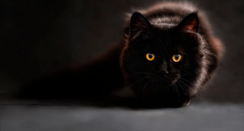 Mister Black ha desertado sin que se sepa el motivo. (Pixabay)