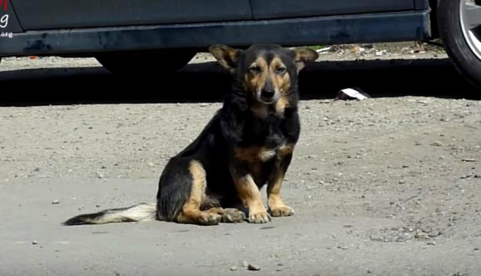 Su historia desató toda clase de reacciones entre los amantes de los animales, sobre todo por un impensado descubrimiento que realizaron sus rescatistas cuando estaban a punto de llevarlo a un refugio. (Foto: YouTube/Howl Of a Dog)