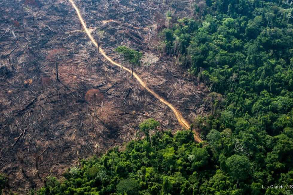 Los caminos forestales son los que han ocasionado el mayor cambio en el paisaje amazónico. Foto: IBC.