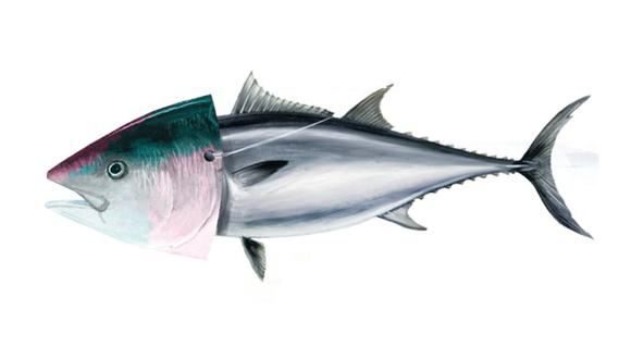 Se revela que el 43% del pescado que se vende en restaurantes y supermercados no corresponde a la especie ofrecida. (El Comercio)
