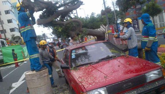 Miraflores: un árbol cayó en plena Av. Larco y dañó dos carros