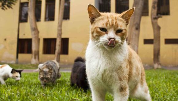 Gatos en Miraflores: ¿Cuál es la situación del parque Kennedy?