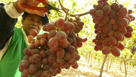Producción de uva se incrementó en 59,1% (Archivo: El Comercio)