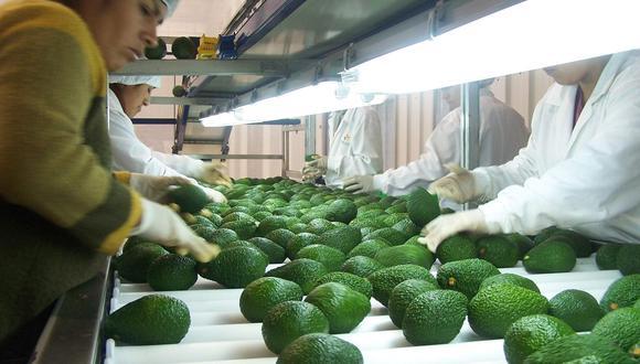 Entre enero y mayo, el principal producto que se exportó fue la palta (US$319 millones). (Foto: GEC)