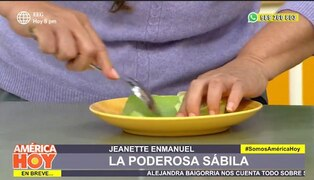 Aprenda a preparar recetas con sábila para aportar beneficios al organismo