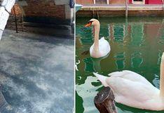 Venecia en tiempos de coronavirus: el cambio es sorprendente   FOTOS