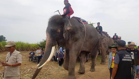 Las autoridades han comenzado a usar cuatro elefantes en la búsqueda de un niño de dos años de Myanmar. (Foto: AP)
