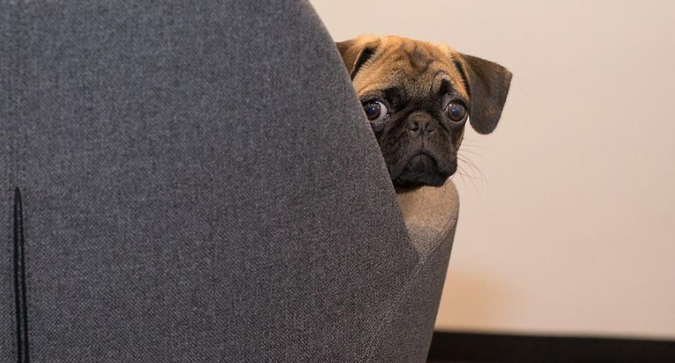 Un video viral de YouTube muestra lo que descubrió una madre de familia que instaló una cámara de seguridad en la habitación de su bebé y vio lo que su perro hacía cuando este comenzaba a llorar. | Foto: Pixabay / designerpoint